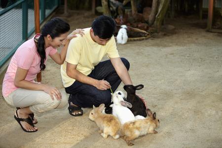 petting: Man and woman feeding rabbits at petting zoo