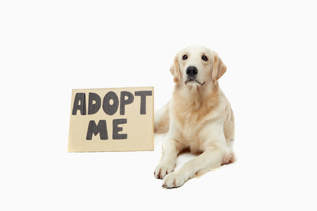 adopted: Dog waiting to be adopted