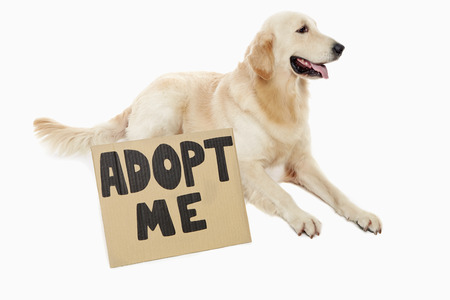 dog waiting: Dog waiting to be adopted
