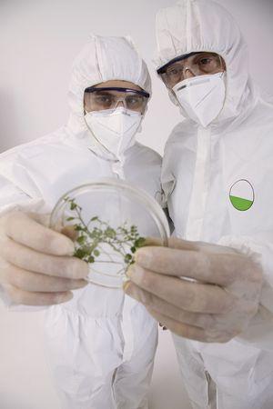 bulgarian ethnicity: Scientists examining petri dish Stock Photo