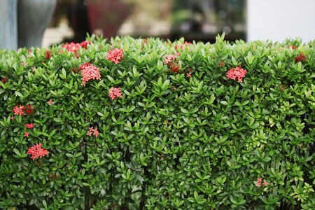 Hedge photo