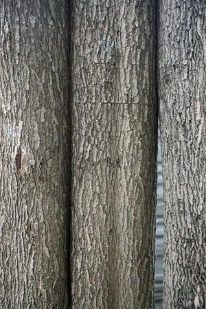trunk  tree: Tronco de �rbol