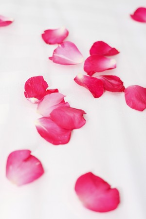Rose petals on bed photo