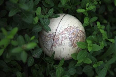 Globe among leaves of a plant photo