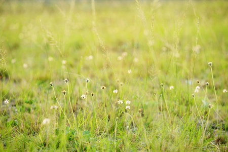 Meadow with wildflowers photo