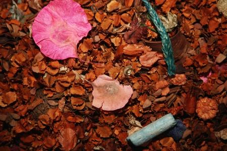 potpourri: Potpourri Stock Photo