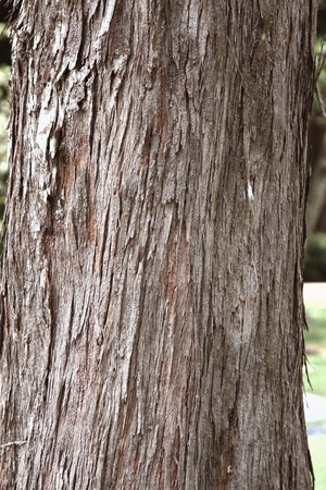 bark: Bark of a tree