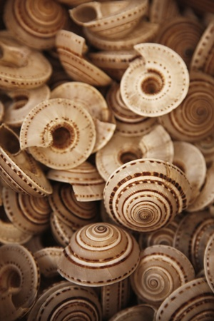 Seashells for sale at a shop Stock Photo - 10862147