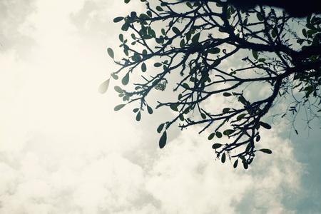 branching: Tree branching pattern