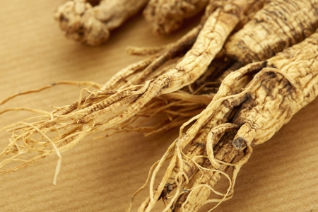 Traditional Chinese herb American Ginseng photo