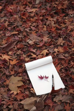 Maple leaves and pen on notepad photo