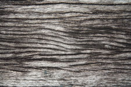 bark background: Close-up of tree trunk