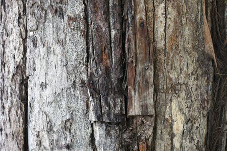 trunk  tree: Close-up de tronco de �rbol