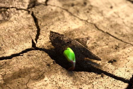 Concept new life. Rising sprout on dry ground. photo