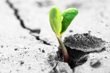 시작: 생태 개념. 마른 땅에 상승 새싹.