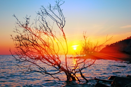 sunset over sea with silhouette tree photo