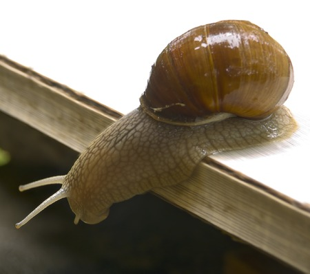 Snails in a court yard of a summer residence. Stock Photo - 1684005