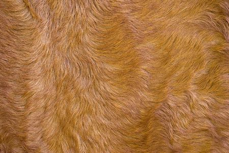 The dressed fur. Brightly colored fur. A close up.