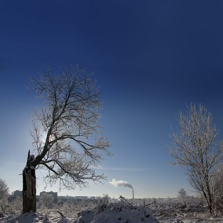 Old lonely tree. Loneliness and oblivion. Simply add star on sky...