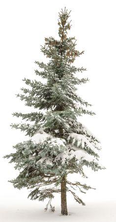 Standing alone fur-tree. Around white snow and the white sky. Winter. Stock Photo