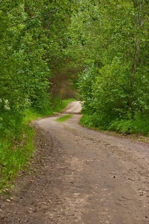 road and path through: Road in green  forest (Latvia). Summer, june. Stock Photo
