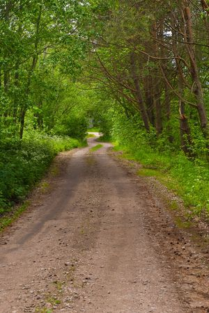 Road in green  forest (Latvia). Summer, june. Stock Photo