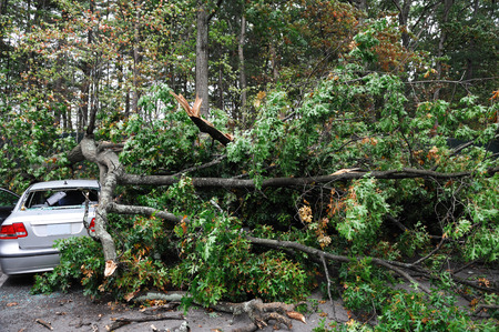 car damaged by fallen tree during storm