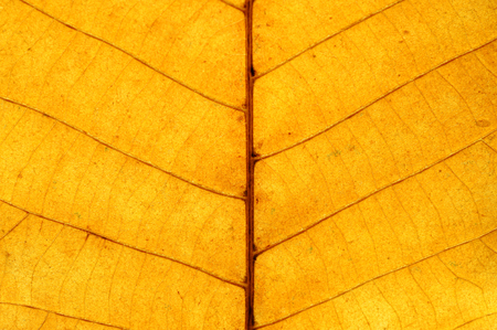close-up on autumn yellow leaf texture
