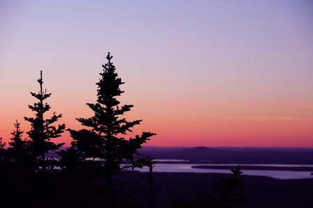 pine tree silhouette: pine tree silhouette against twilight sky