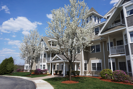 apartment building with spring tree
