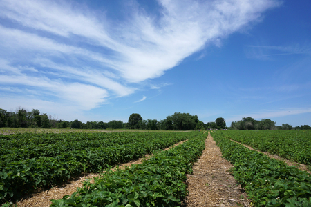 farm field: spring farm field Stock Photo
