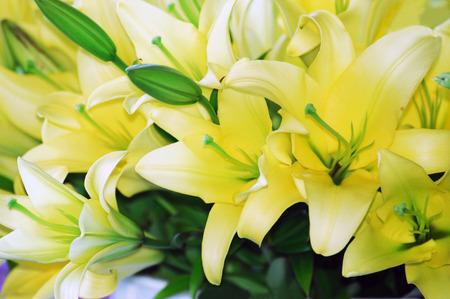 yellow: yellow lilies