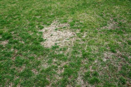 bad condition: lawn in bad condition and need maintaining Stock Photo