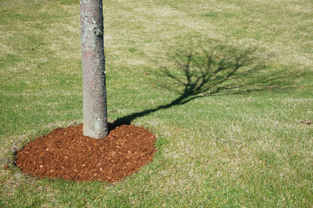 to shade: tree shade on the lawn