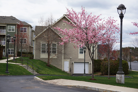 apartment: apartment community with cherry blossom in spring