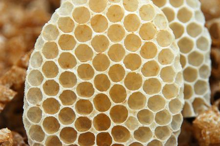 close up on honeycomb