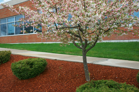 cherry blossom and landscape outside company building in spring