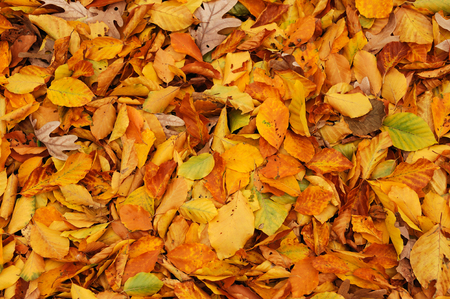 colorful autumn leaves background Stock Photo