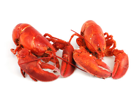 red cooked: cooked red lobster isolated on white background