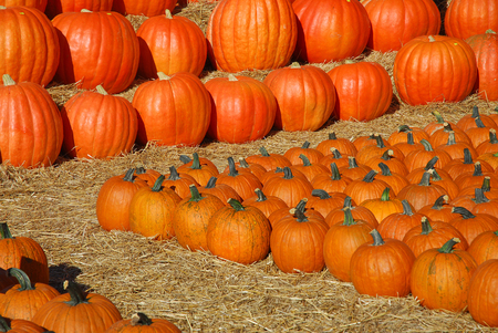 pumpkin harvest and arranged on the ground
