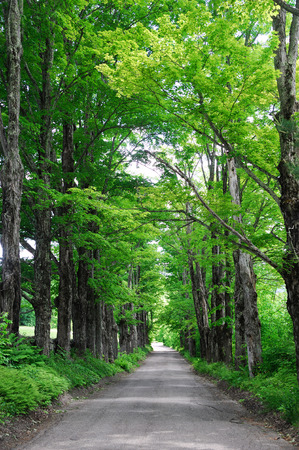 both sides: country road with green trees on both sides