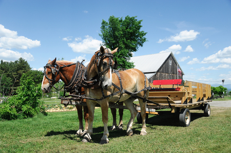 horse wagon on the meadow in village