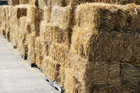 close up on stacking hay bales in the farm Imagens