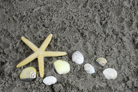 sea star: sea star and shells on sand in the beach