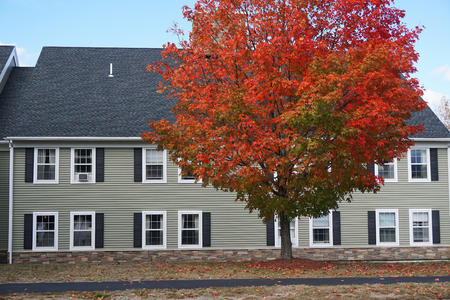 fall trees: apartment buildings and autumn tree Stock Photo