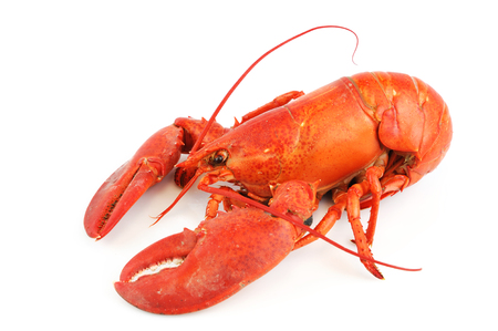 lobster isolated: single cooked red lobster isolated on white background