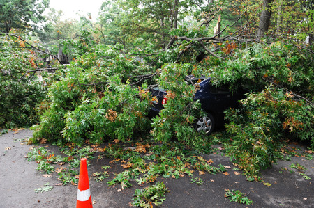 car damaged by fallen tree during storm Stok Fotoğraf - 62589674