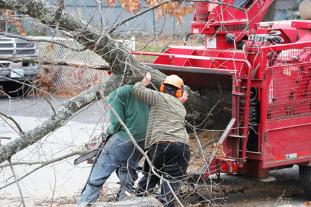 tree service business: tree removal and worker moving tree trunk to grinding machine Stock Photo