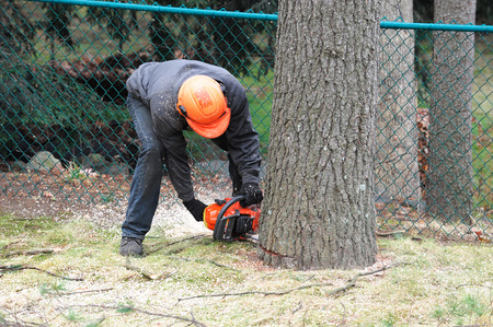 working man cutting tree trunk with chainsaw in residential area Foto de archivo