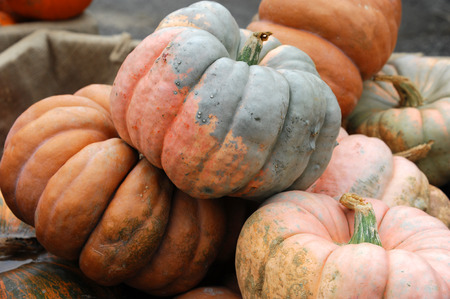 different pumpkins stacking in pile in harvest season
